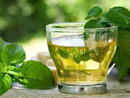 Uống trà ngâm bạc hà mỗi ngày giúp sạch phổi và giảm cảm giác thèm thuốc lá