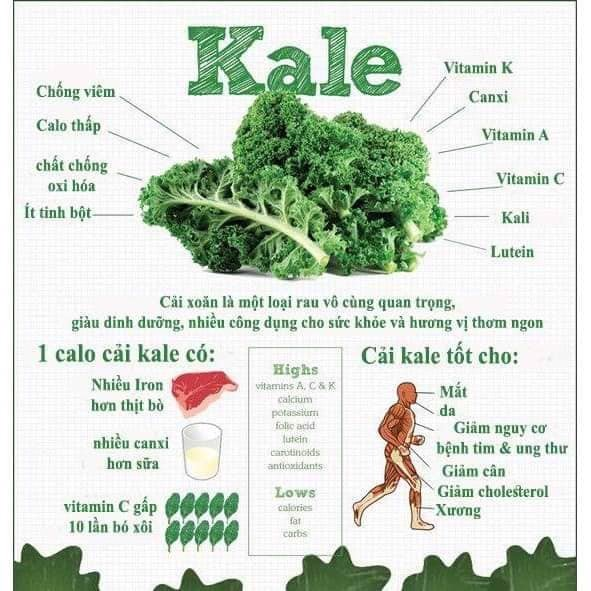 Mì cải xoắn Kale